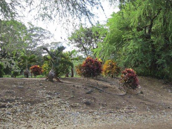 Koko Crater Botanical Garden : Hawaiian section?