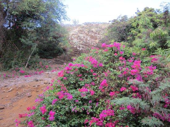 Flower Picture Of Koko Crater Botanical Garden Honolulu Tripadvisor