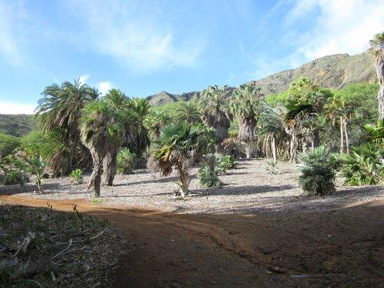 Koko Crater Botanical Garden : Dryland palms