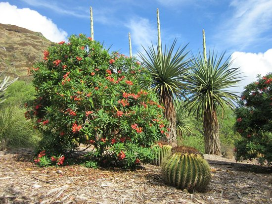 Koko Crater Botanical Garden : America's section