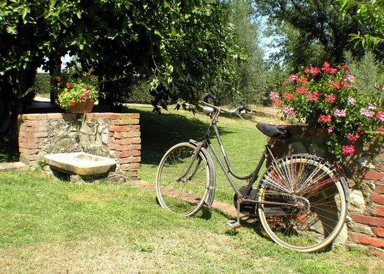 Imagen de Agriturismo Il Sole Verde