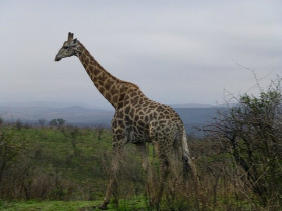 Thula Thula Exclusive Private Game Reserve and Safari Lodge: View on the Game Drive