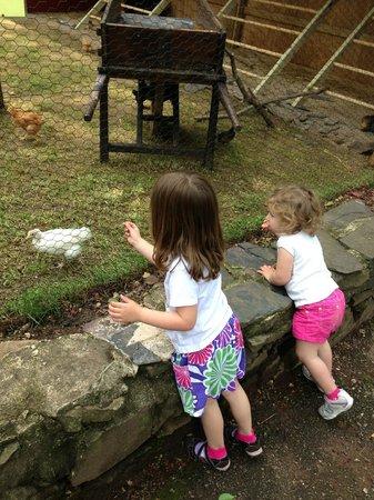 Elmwood Park Zoo: CHICKEN COOP