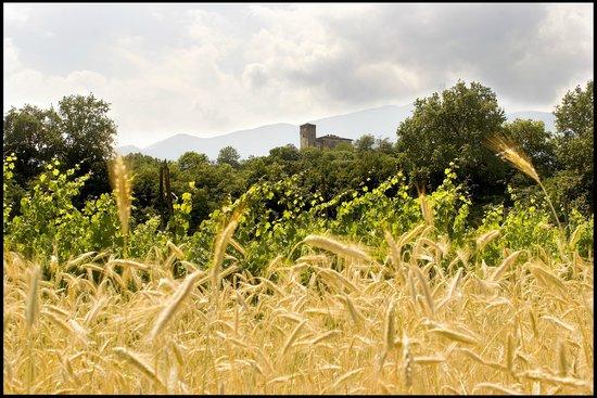 Agriturismo Castello di Bagnolo : Estate 2013 vacanze castello