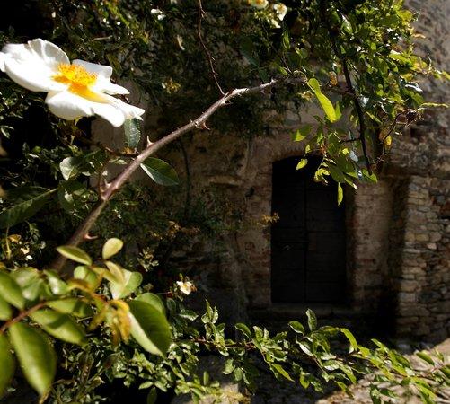 Agriturismo Castello di Bagnolo : Rosa antica Castello di Bagnolo