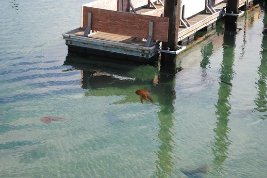 Coast Guard Pier: Jellyfish