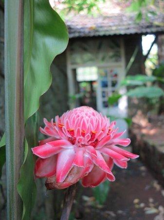 Mayapott Plantation Villa : 6