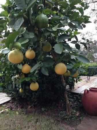 Jefferson House Bed and Breakfast: Lemon Tree on the Deck overlooking Cane River