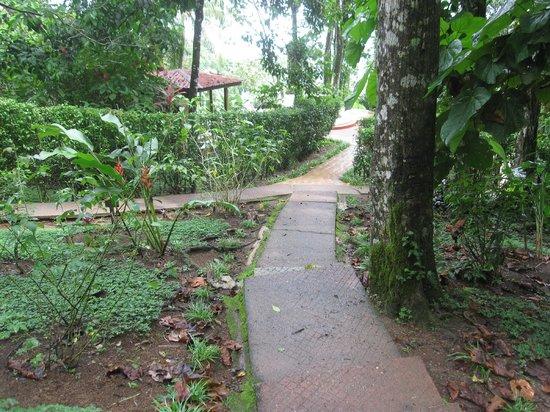 Samasati Retreat & Rainforest Sanctuary : Pathways are paved but sometimes steep