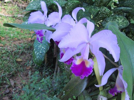 Hacienda Pomarrosa: flowers abound