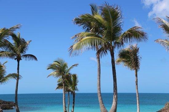 The Cove Eleuthera: trees