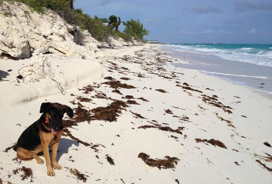 Exuma Palms Hotel: Rovella, watcher of the grounds, on the Beach