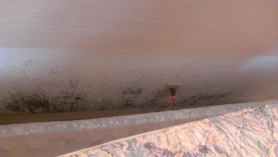 City Center Motel: Black Mold pull out bed and look