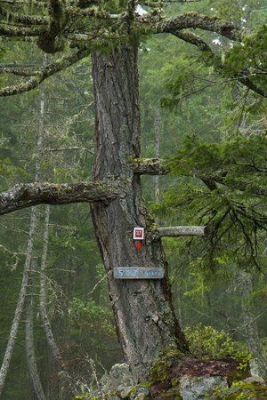 The Sunshine Coast Trail - Day Tours : A lonely tree SCT marker - Emma Levez Larocque photo