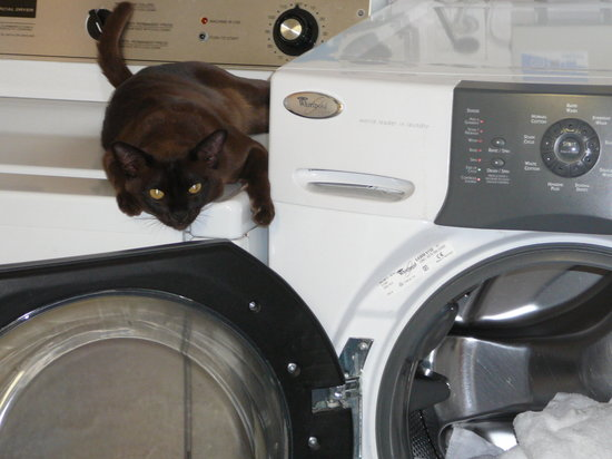 """Archway Motels : """"Archie"""" the Archway cat- keeps an eye on the laundry"""