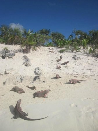 Exuma Water Tours: Island of the Iguanas