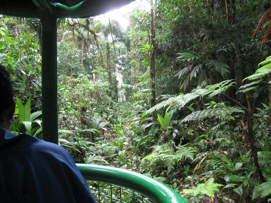 Rainforest Adventures: view from the tram in the high canopy. saw butterflies that live only at this level.