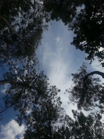 Huttopia Rille : Campsite hammock view above!