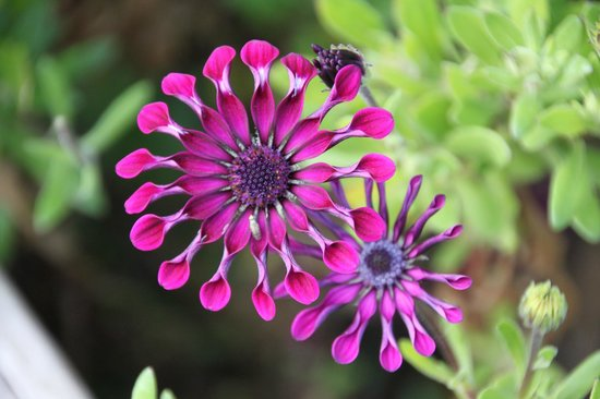 Double Dutch B & B: Prachtig onderhouden kleurrijke tuin