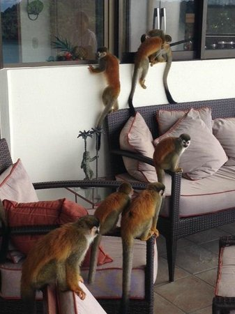 Tulemar Bungalows & Villas: Monkey Visitors
