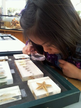Kidspace Children's Museum : Checking out the small insects...