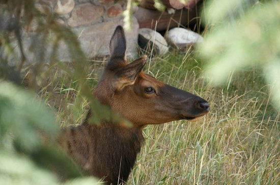 Fairmont Jasper Park Lodge: Sharing the nature with the animals