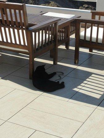 Tzekos Villas : El gato jugando con la culebra muerta debajo de uno de los sillones