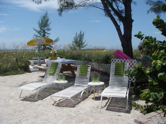 Beach Side Palms