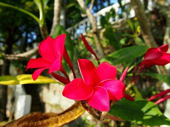 Closenberg Hotel: Flower Gardens