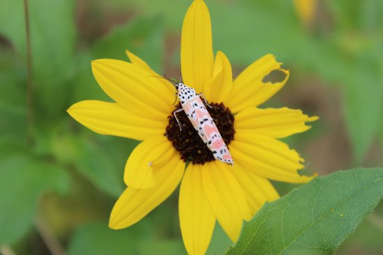 Robinson Nature Preserve: Colorful butterfly