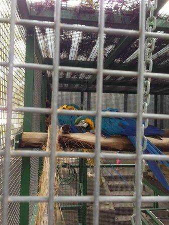 Ashmore Palms Holiday Village: Macca's Birds