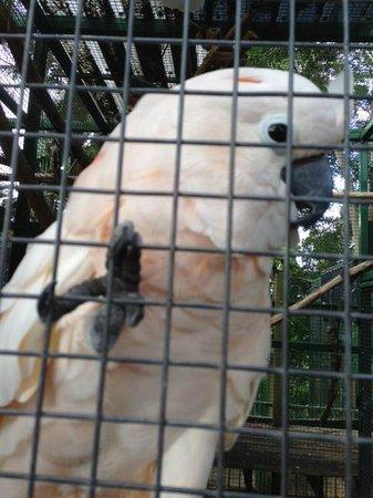 Ashmore Palms Holiday Village: Friendly Bird