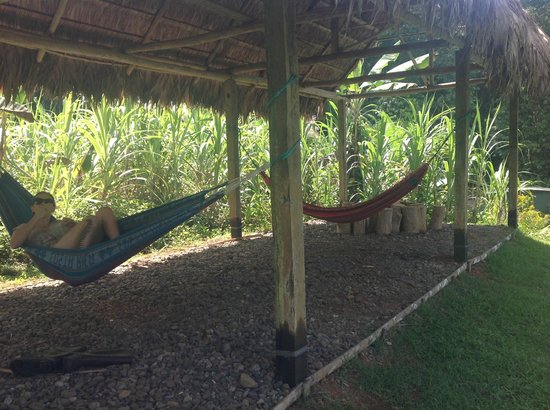 Campanario Biological Station: Hammock cabana