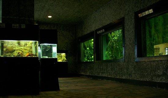 """Oceanarium Akvamir: """"внутреннее убранство"""" океанариума Владивостока"""