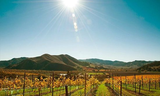 Santa Barbara Wine Region
