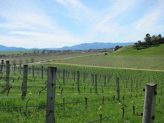 VinEssense Marlborough: Beautiful View from tasting room