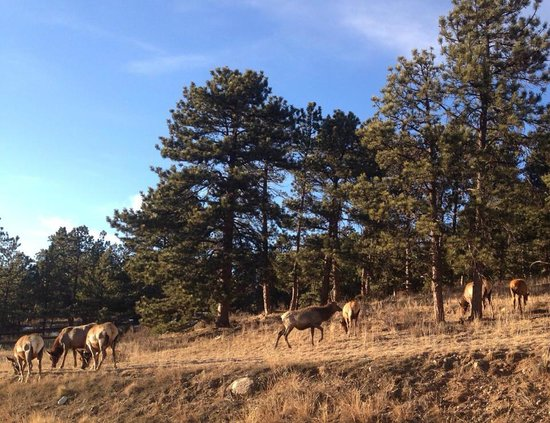 Coyote Mountain Lodge: we saw plenty of Elk!
