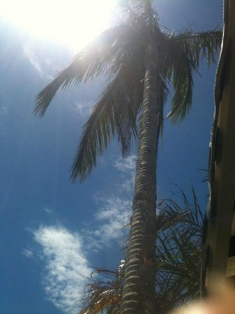 Atlantic Byron Bay : The famous palm tree;-)