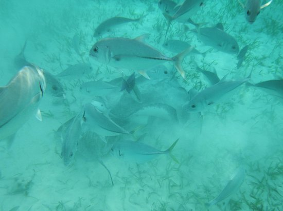 White Sands Cove Resort: Fish from snorkel trip