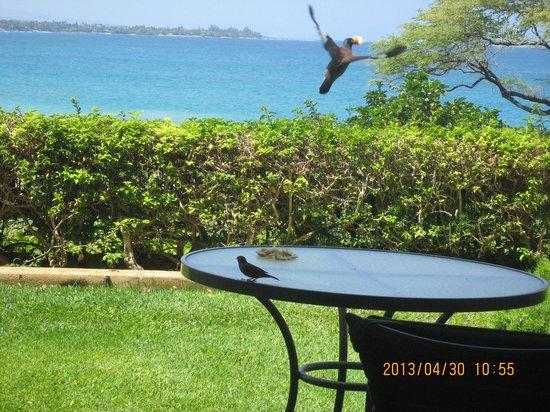 Hapuna Beach Prince Hotel: 見事なお客さん