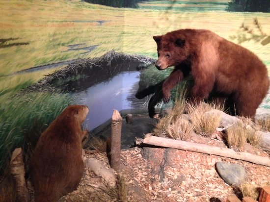 Hampton Inn & Suites Springdale Zion National Park: Animal Museum at Majestic View Lodge