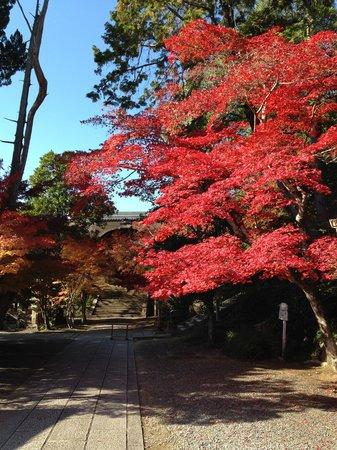 Komyoji Temple: まっかな もみじ