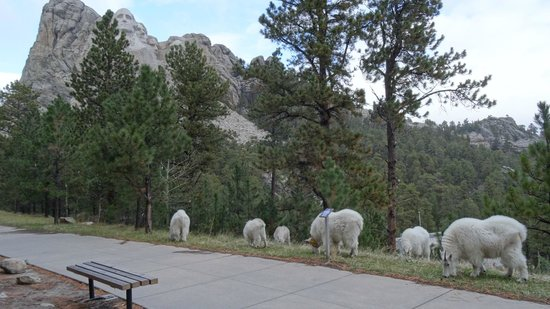 Mount Rushmore National Memorial: some wildlife by the monument