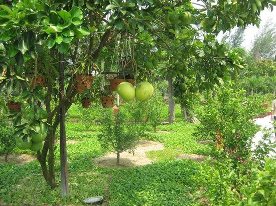 Phu Thinh Boutique Resort & Spa : Beautiful grounds