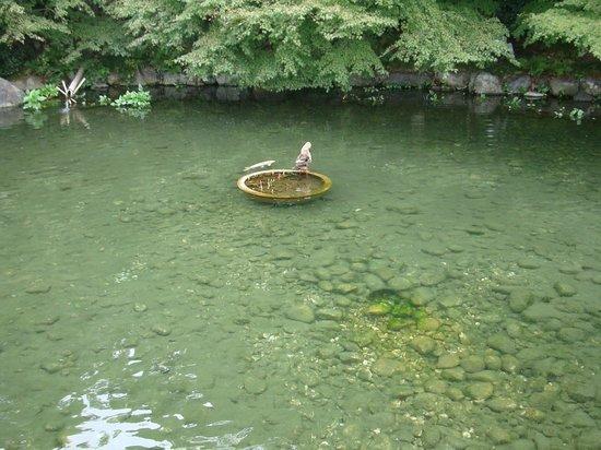 Tokugawa Garden: 徳川園内の池。