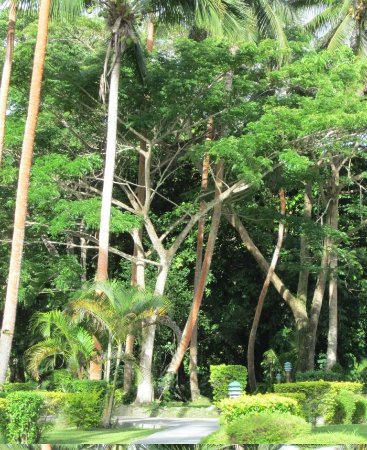 Mango Bay Resort Fiji: garden back drop