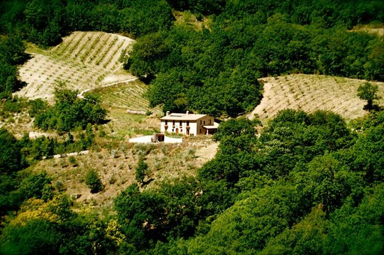 Agriturismo Il Piano : View of the farmhouse from the medieval watchtower