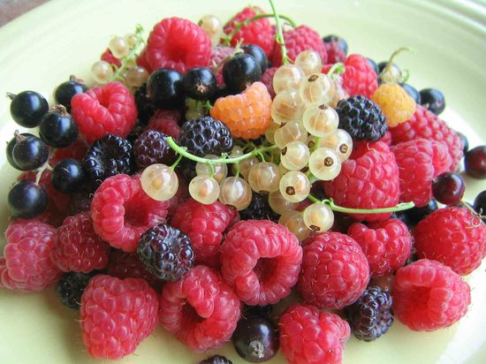 Agriturismo Il Piano : Freshly-picked organic berries for breakfast