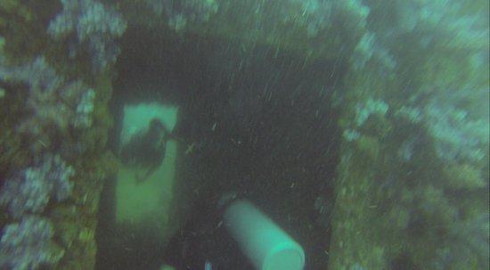 Ocean Geo Diving & Tours: King Cruiser Swim Through