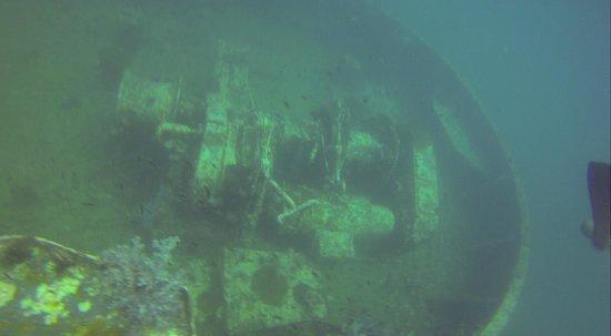 Ocean Geo Diving & Tours: King Cruiser